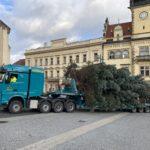 Vánoční strom Kladna vyrostl v Dubí, rozsvícení bude na internetu