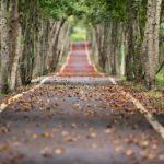 V deseti krajích se podél silnic převážně kácelo. Sazenice nestačí nahrazovat padlé stromy